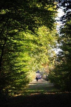 La charte du promeneur en forêt