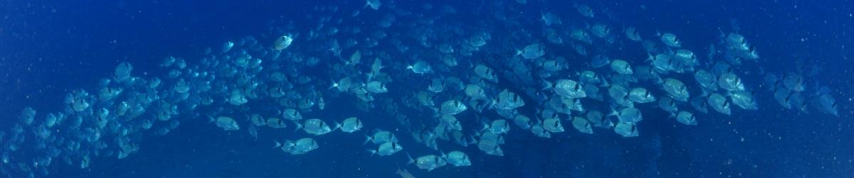 Aquabormes : site officiel du club de sports sous-marins de BORMES LES MIMOSAS - clubeo