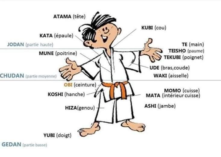 Lexique du corps du judoka