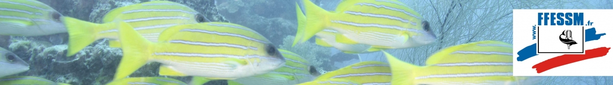 PERONNE PLONGEE : site officiel du club de sports sous-marins de PERONNE - clubeo